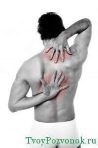2 и 3 позвонок грудного отдела