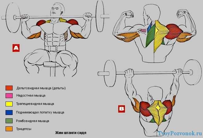 Как накачать мышцы в домашних условиях без железа видео - Keramoplitnn.ru