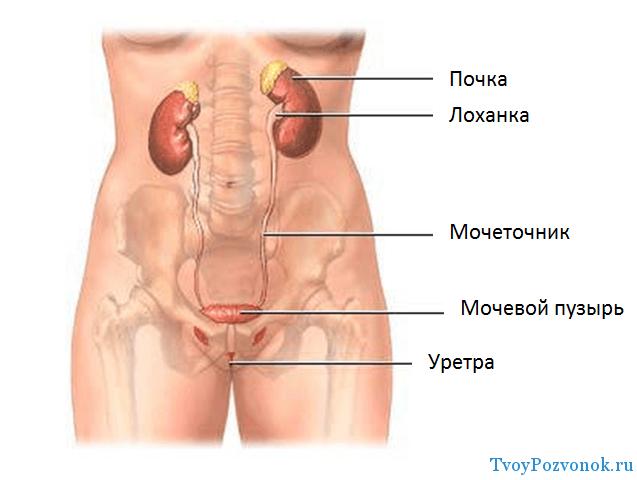 Как определить что спровоцировало появление крови в моче
