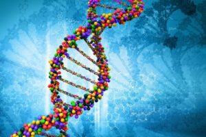 Генетические цепи
