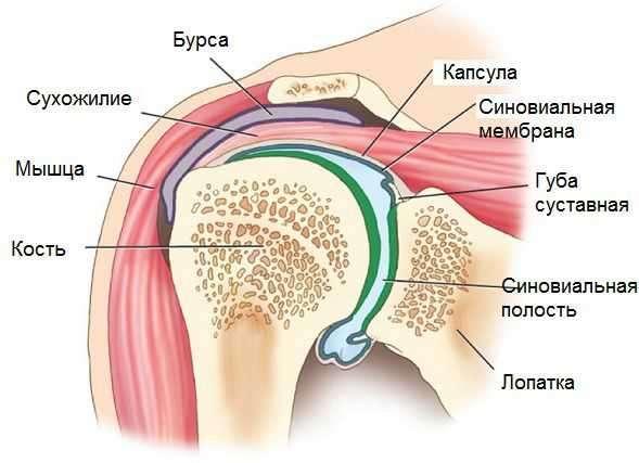 синовиальной оболочки плеча